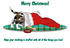 Houla_in_stocking
